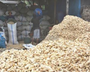 corn-pellets-factory